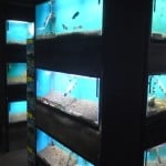 Aquatic World Fish Store Review