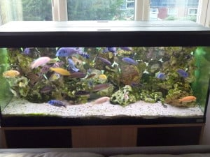 How Much Does It Cost To Run A Fish Tank Aquarium