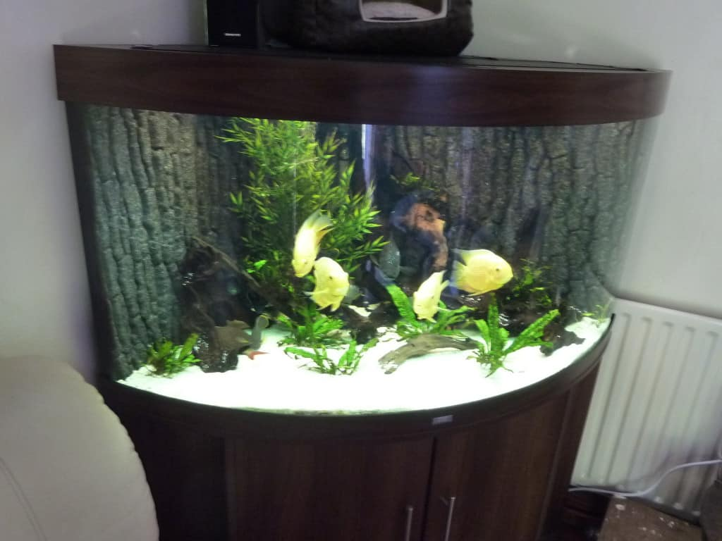 South american cichlid corner tank 350l tropical fish site for Corner fish tanks