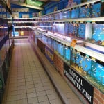The Goldfish Bowl Oxford Fish Store Review