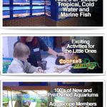 Aquascope Fish Store Review