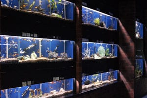 i-tropicalfishtanks
