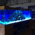 Inverness Maidenhead Aquatics Fish Store Review