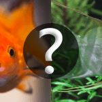 Why Is The Compatibility Of Tropical Fish So Important