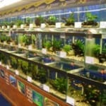Shenstone Ripples Waterlife Fish Store Review