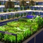 Tamworth Ripples Waterlife Fish Store Review