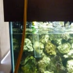 How To Perform A Fish Tank Aquarium Water Change