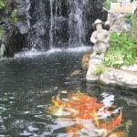 Effective Fish Pond Cleaning Tips for Beginners