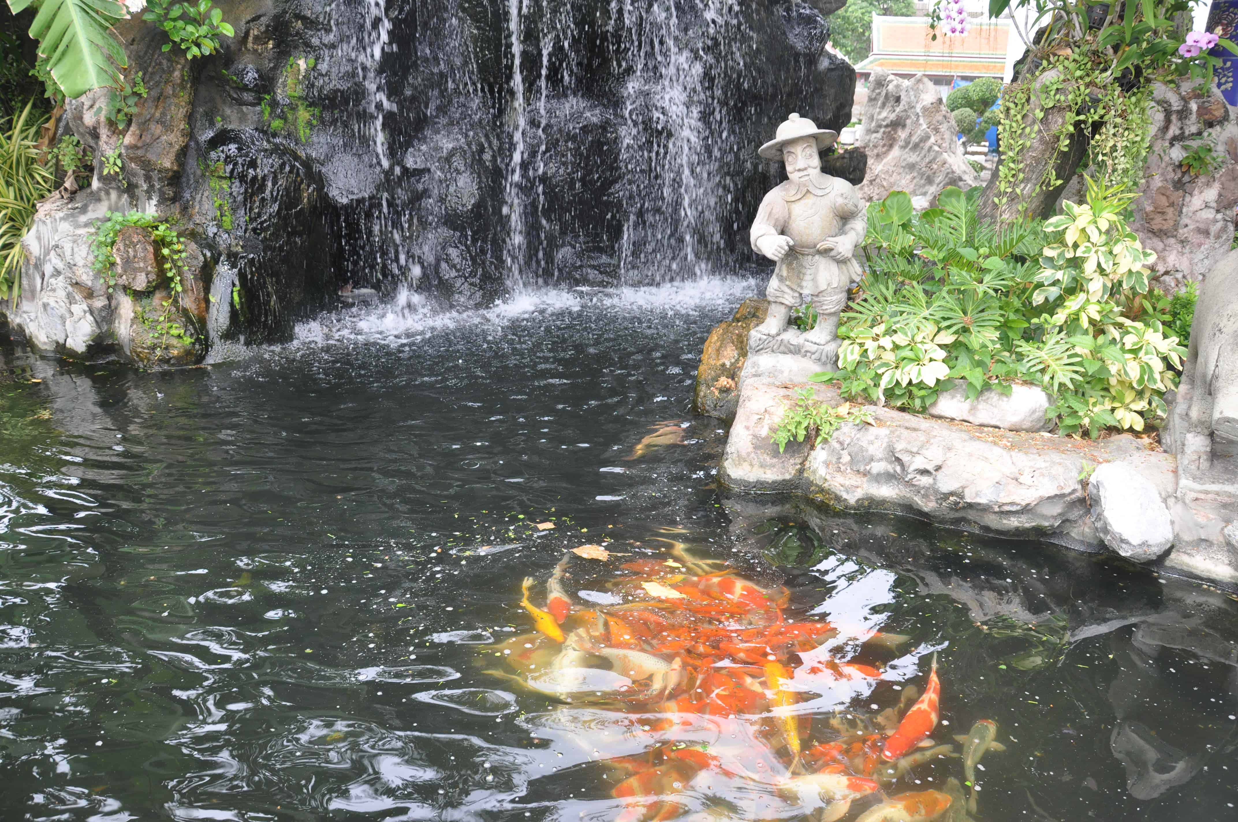 fish-pond-cleaning