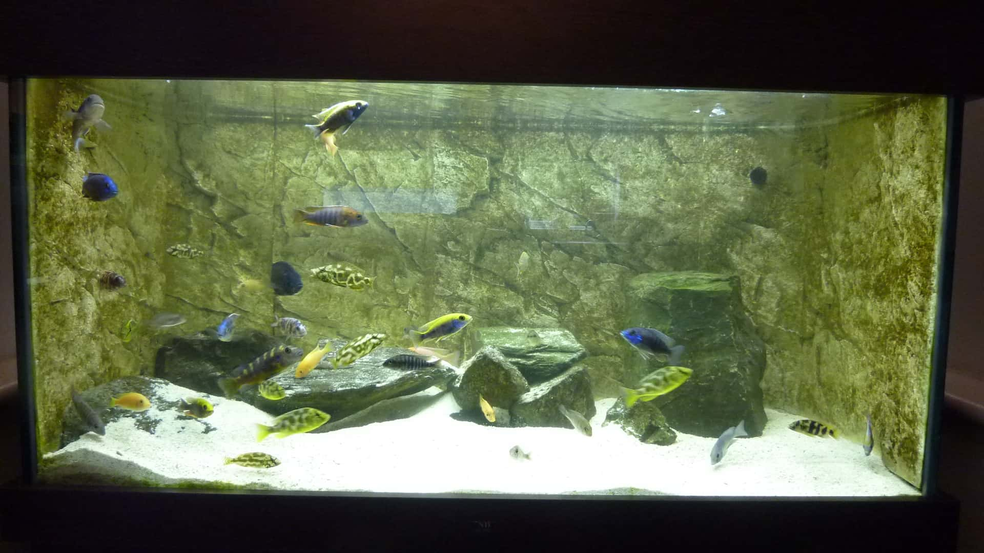 How To Install A Foam Based 3d Background To A Fish Tank Aquarium Tropical Fish Site