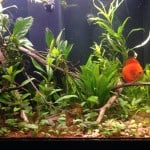 Choosing An Aquarium Substrate