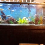 150 Gallon African Cichlids Aquarium