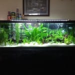 125 Gallon Freshwater Planted Aquarium