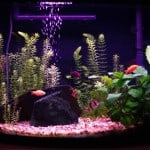 16 Gallon Community Aquarium