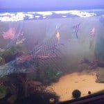 250 litre Community Fish Tank