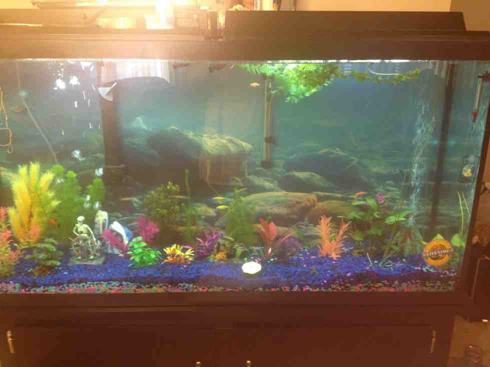 60g freshwater tank tropical fish site for 60 gallon fish tank