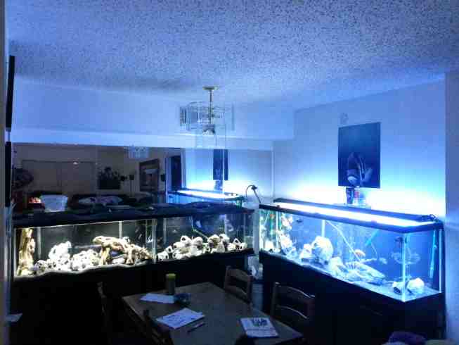 Aguirre Fish Room Tropical Fish Site