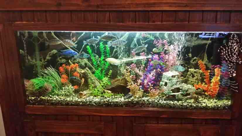 fully-enclosed-cichlid-tank-1