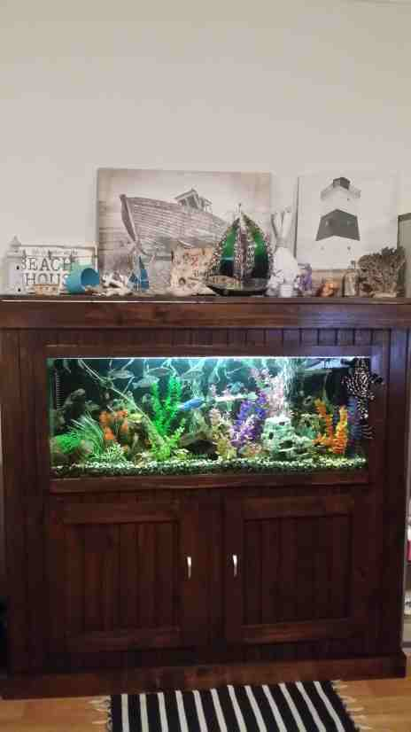 fully-enclosed-cichlid-tank