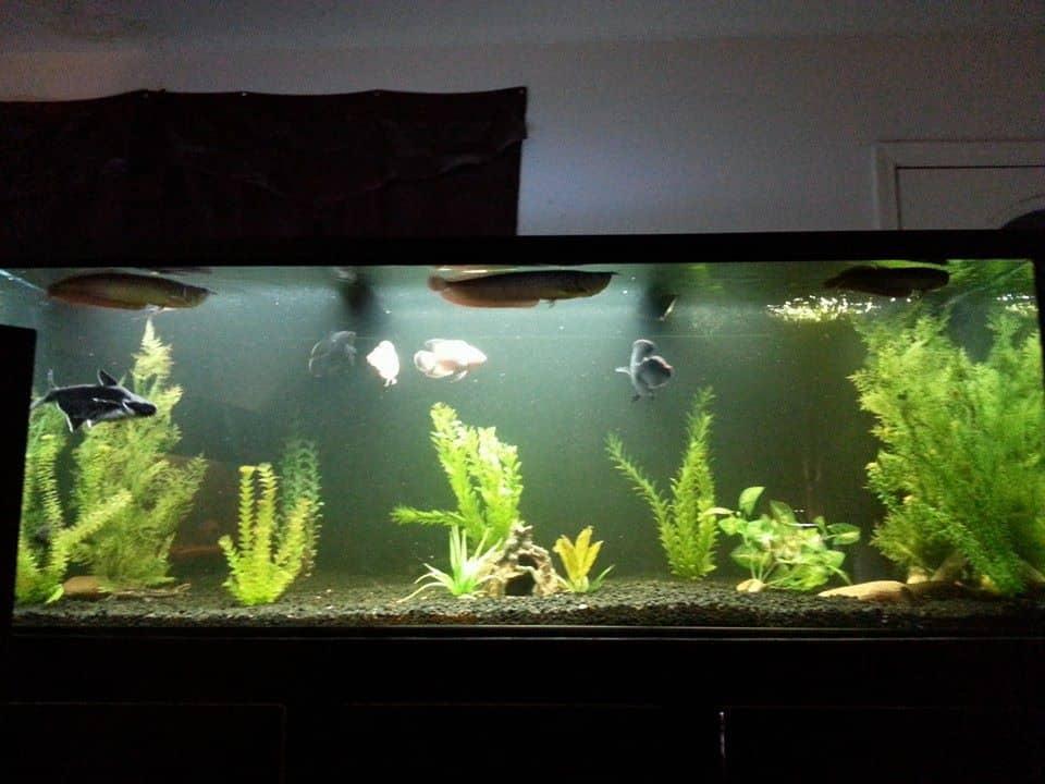 monster-fish-tank