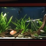 New World Cichlid Tank