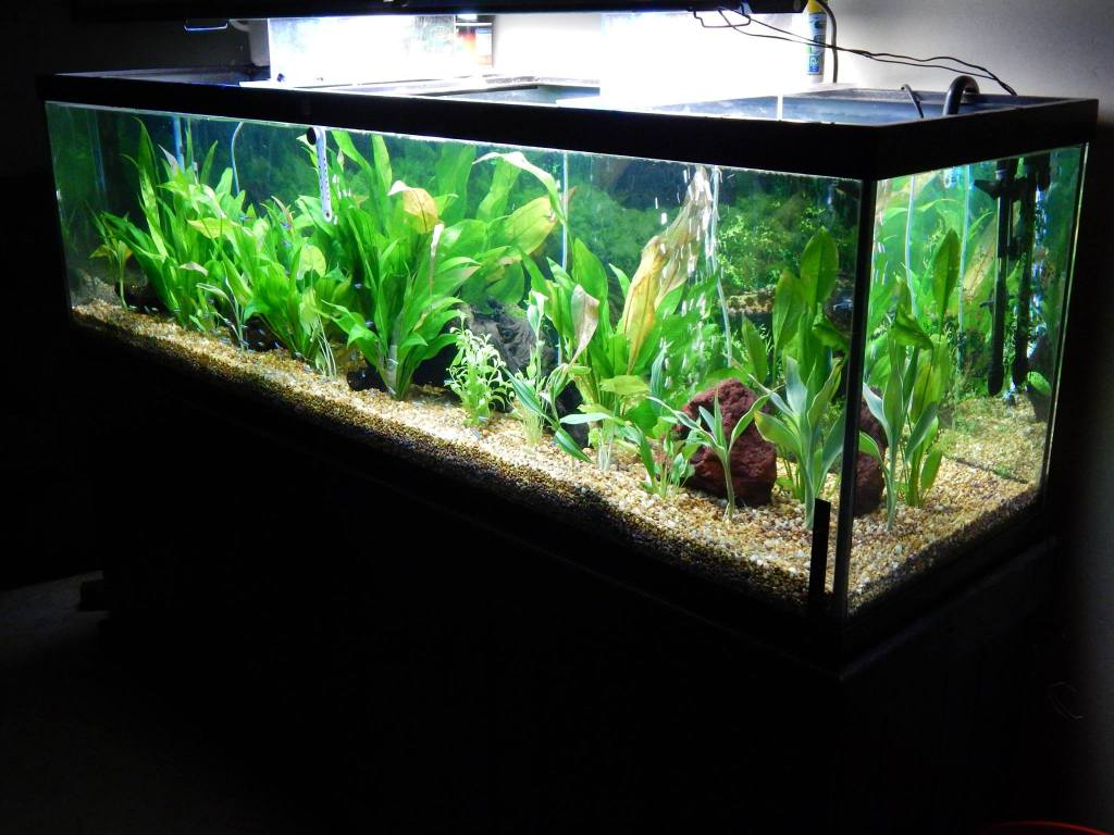 125 gallon planted aquarium tropical fish site for 75 gallon fish tank dimensions