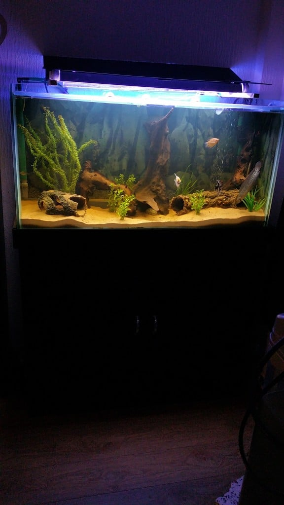 daves_new_diy_tank_1