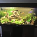 Mixed African Cichlid Tank