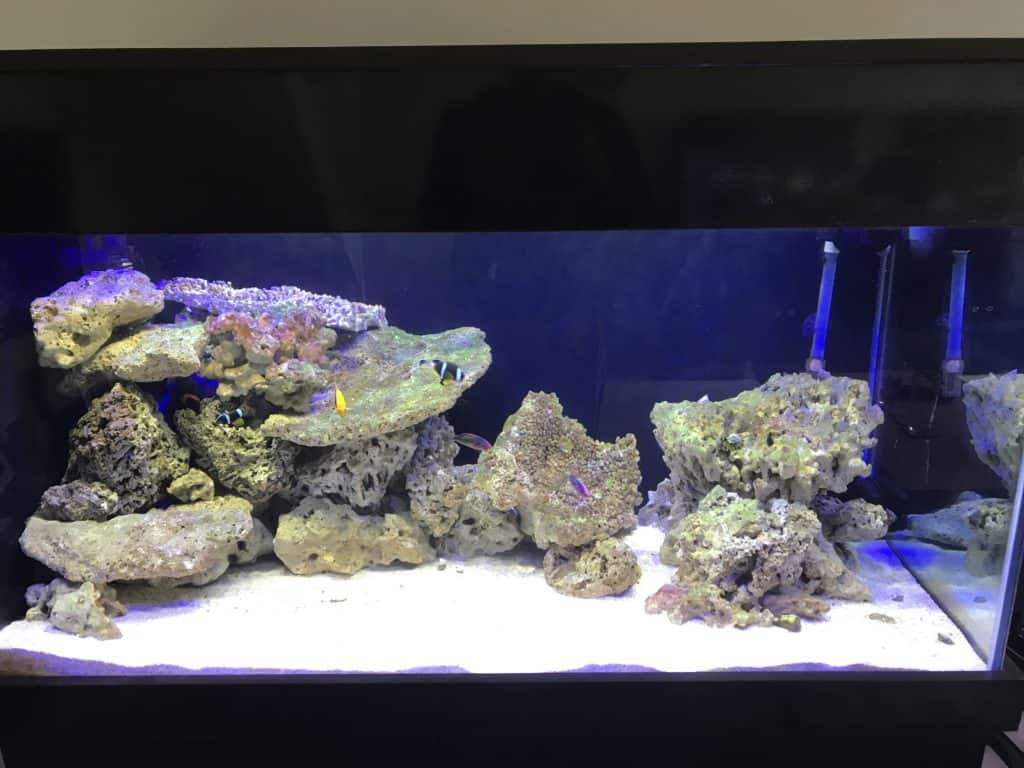 Best type of rock for a marine saltwater fish tank for Best saltwater aquarium fish
