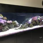 Best Type of Rock for a Marine Saltwater Fish Tank Aquarium