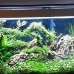 Wild Nature Fish Tank Aquarium