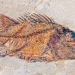 From Cambrian to Current: A Fish Evolution Story