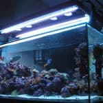 Everything You Need To Know About Using T5 Lights For Your Aquarium